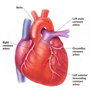 Know about the human heart and its functions heart pulse diseases ccuart Choice Image